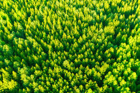 aerial tree tops free stock photo domain pictures