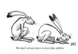 rabbit cartoon boblog