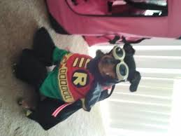 Jade Halloween Costume Batman U0027s Robin Dog Halloween Costume Shipping