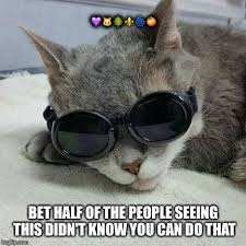 Cool Cat Meme - cool cat memes imgflip