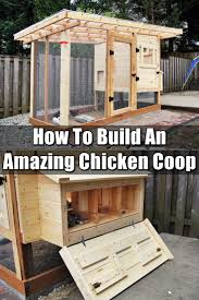 how to build an amazing chicken coop coops homesteads and