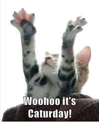 Caturday Meme - woohoo it s caturday caturday meme on esmemes com