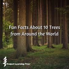 teaching about trees activity and facts about 10 trees from
