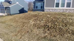 lawn care guide lawn care tips and useful ideas for those in the