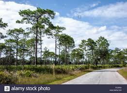 Florida scenery images Lake wales florida lake kissimmee state park nature natural jpg