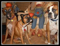 boxer dog howling the legacy chronicles happy howl o ween from lbr