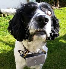 Halo For Blind Dogs Jordy Canid Inc Blindsight High Tech Products For Blind Dogs