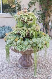2710 best succulents images on pinterest succulent plants