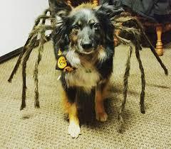 Dog Spider Halloween Costume Halloween Pet Costume Contest 2016 Upper Valley Veterinary Clinic