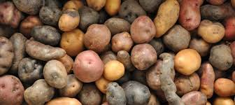 multi cuisine meaning what is the meaning of a potato cuisine as language for