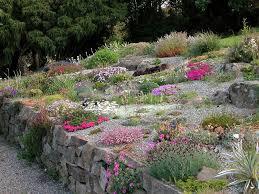 Rock Garden Plant Growing Alpine Plants Perennials And Miniature Bulbs