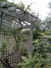 specialty gardening cottage garden trellis designs 1 by wind