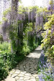 wisteria sinensis australian bush flower 594 best wisteria images on pinterest flowers gardens and