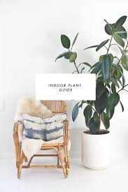 Easy House Plants 286 Best Plants Images On Pinterest Houseplants Plants And