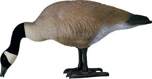 your store bigfoot canada goose or specklebelly decoys for yard