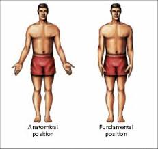 Picture Of Anatomical Position Anatomical Position Are You Familiar With The Word Kinesiology It