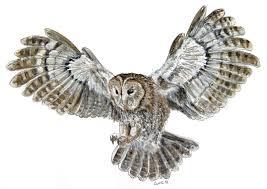 owls drawings flying