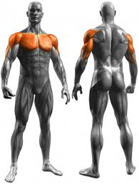 decline bench press muscles decline dumbbell press chest exercises exercise guides