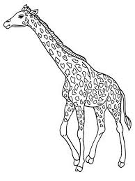 free printable giraffe coloring pages for kids at page eson me
