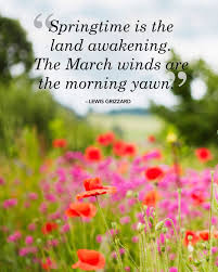 Spring Flower Pictures Best 25 Spring Quotes Ideas On Pinterest Blossom Quotes Cherry