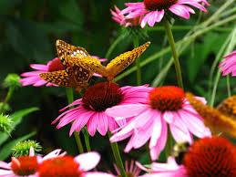 file butterflies flower forestwander jpg wikimedia commons
