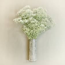 baby s breath flower flower study baby s breath