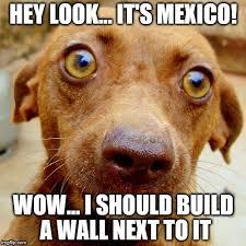 Orange Dog Meme - wow dog memes imgflip
