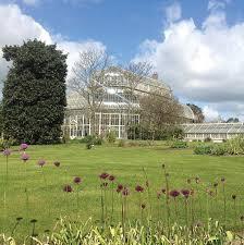 irish native plants botanical art worldwide ireland u2014 botanical art worldwide