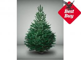best real Christmas trees   The Independent pines and needles jpg