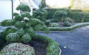 can i plant plants in cold weather in the uk london uk