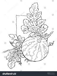 watermelon coloring page stock vector 477686248 shutterstock
