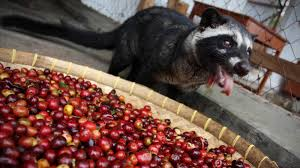 Luwak Coffee now a test can tell if your pricey cup of cat coffee is