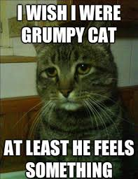 Depressed Drinking Meme - simon the depressed cat is my new favorite meme pophangover