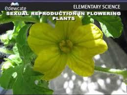 4 examples of unisexual u0026 bisexual flowers youtube