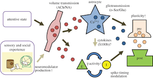volume transmission and astrocytes philosophical transactions of