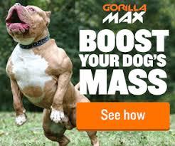american pitbull terrier game bred bloodlines razors edge pit bull bloodline history kinneman kennels american