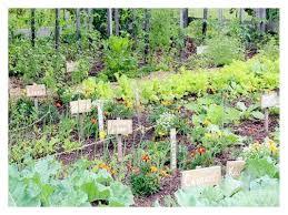 i4 vegetable gardening ideas on apartment