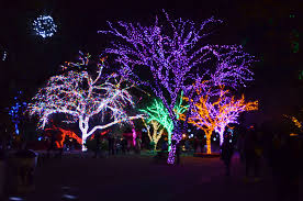 when do the zoo lights start zoolights