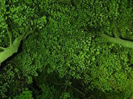 trees save lives atlanta magazine