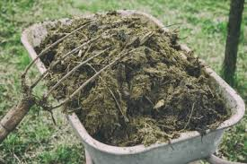 Garden Fertilizer Types - different types of animal manure pros and cons of using manure as
