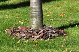 Garden Mulch Types - rock versus mulch get to know their differences