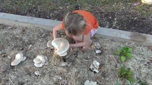mushrooms growing in my vegetable garden room design plan luxury