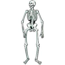 halloween skeleton images amazon com jointed skeleton toys u0026 games