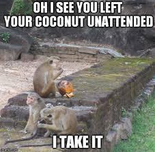 Drunken Memes - monkey memes the result of a drunken afternoon sorting out sri