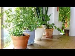 benefits of houseplants the health benefits of houseplants youtube