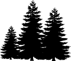 pine tree silhouette clip cliparts accent wall mural