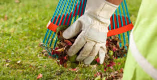 Landscaping Columbia Sc by Yard Clean Up Columbia Sc Chop Chop Landscaping Columbia Sc