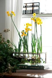 Fragrant Indoor House Plants - fragrant houseplants in the garden