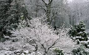 in pictures beautiful gardens in winter telegraph