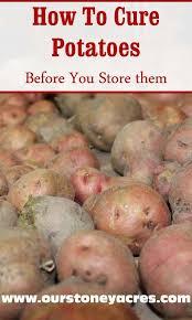 best 25 potato storage ideas on pinterest onion storage diy